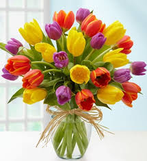 Tulips are the most comfortable flowers by choice